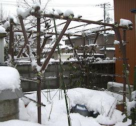冬のキウイ棚