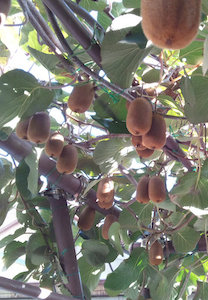 果実たくさん
