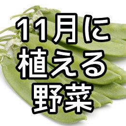 11月に植える野菜