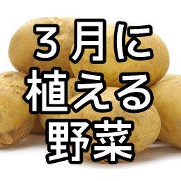 3月に植える野菜