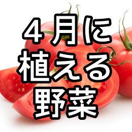 4月に植える野菜