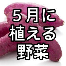 5月に植える野菜