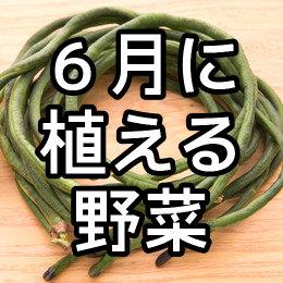 6月に植える野菜