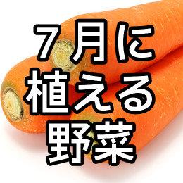 7月に植える野菜