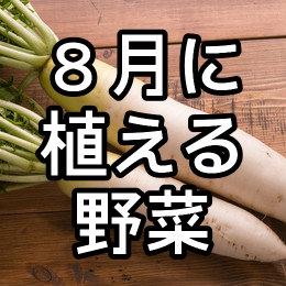 8月に植える野菜