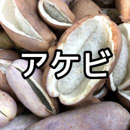 アケビの育て方・栽培方法