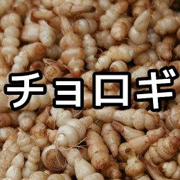チョロギの育て方・栽培方法