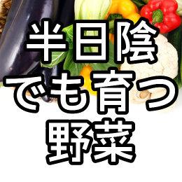 半日陰でも育つ野菜・暑さに強い野菜・寒さに強い野菜