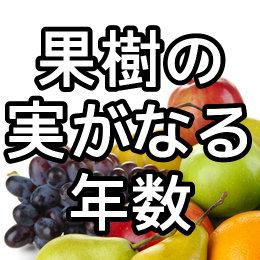 果樹の実がなるまでの年数
