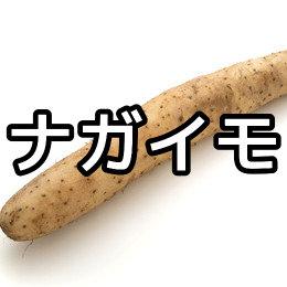 ナガイモ(長芋)の写真