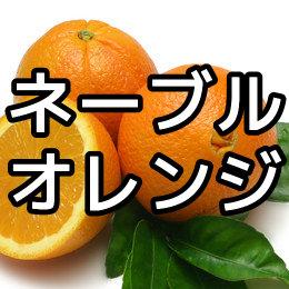 ネーブルオレンジの写真