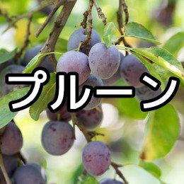 プルーンの育て方・栽培方法