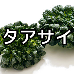 タアサイの育て方・栽培方法