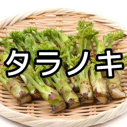 タラノキの育て方・栽培方法
