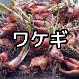 ワケギの育て方・栽培方法