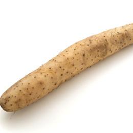 ナガイモの写真