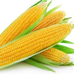 トウモロコシの写真