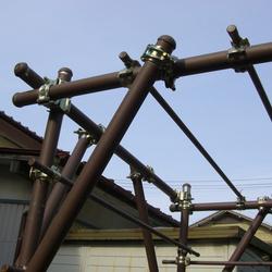 キウイ棚(ブドウ棚)の写真 天井